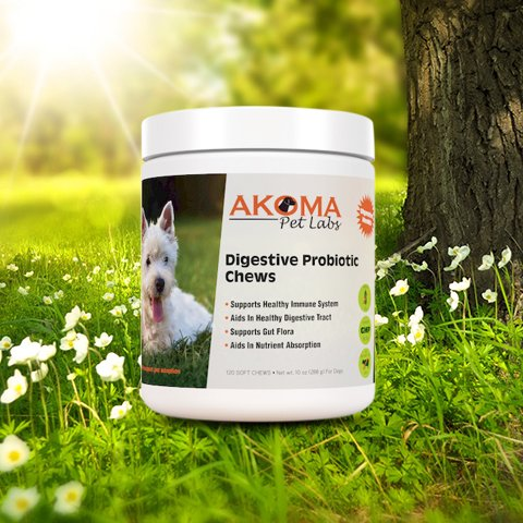 Akoma Digestive Probiotic Chews for Dogs